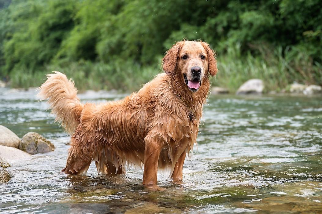 10 rad veterinární lékařky: Jak se starat o psa, aby si užil léto
