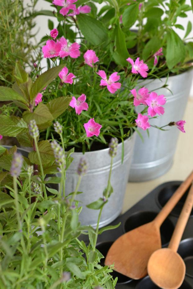 Zahrádka v květináči 3