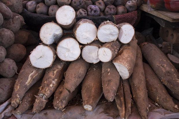 Maniok je velmi zdravý. Ovšem pozor na přípravu! Foto: