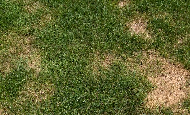 Zníte o zeleném trávníku? Použijte na něj alkohol! Foto: