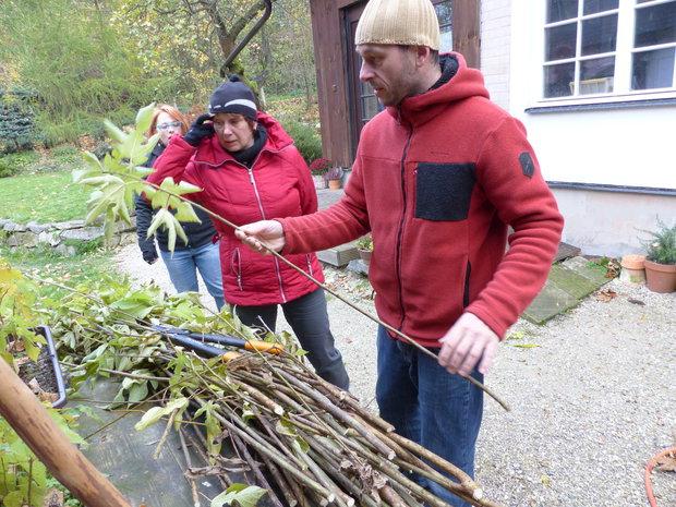 Výroba papíru začíná na zahradě, kde pěstují papírenské moruše, keře, jejichž jednoleté výhony se na podzim u země uříznou Foto: