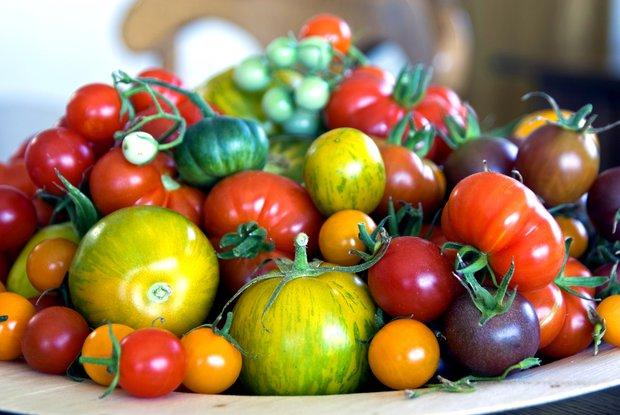 Rajčat existuje mnoho druhů různých barev, velikostí a tvarů Foto: