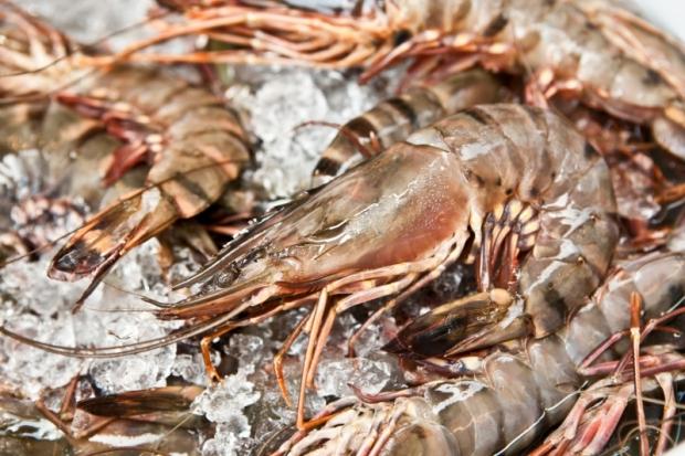 Čerstvé nepředvařené krevety  Foto: Kitchenette.cz