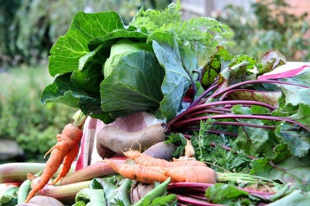 Kvašená zelenina nebo-li pickles  Foto: