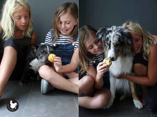 Muffiny pro psy Foto: